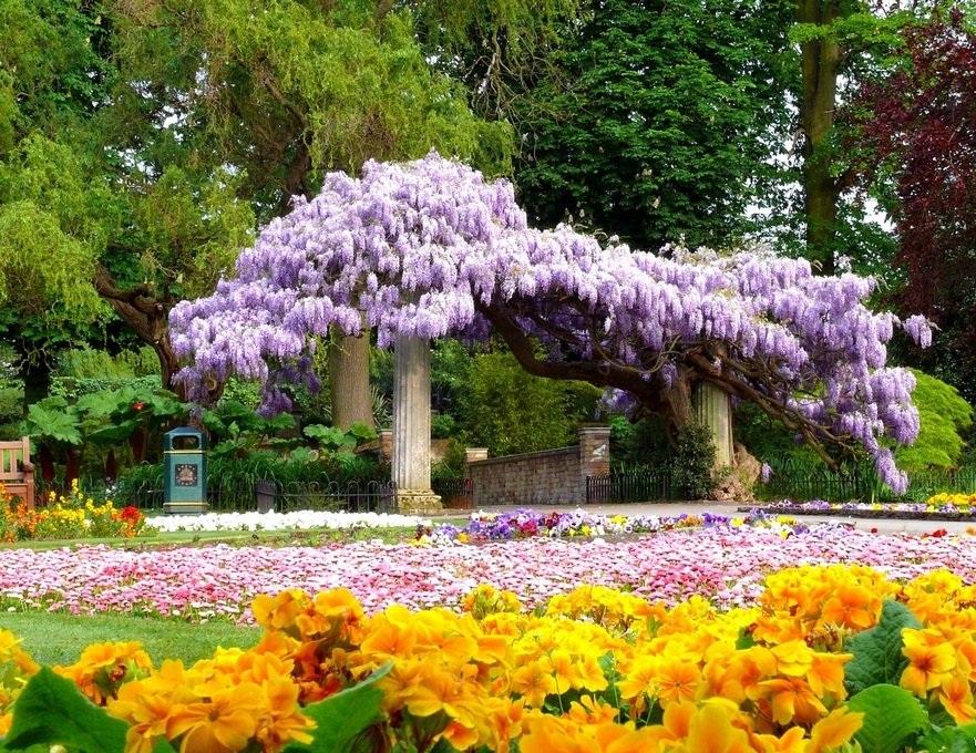 plantas para jardim muito solFotos de flores para jardim externo com