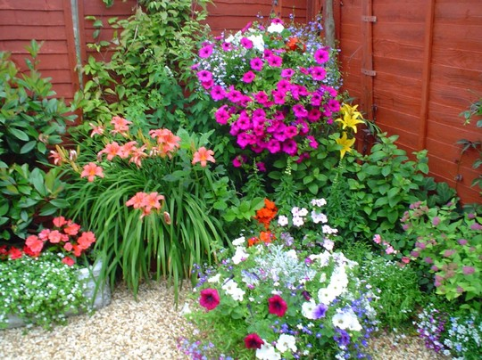 Flores para Jardim externo com sol  Decorando Casas