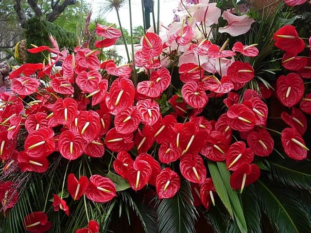 plantas para jardim muito sol:Fotos de flores para jardim externo com sol: