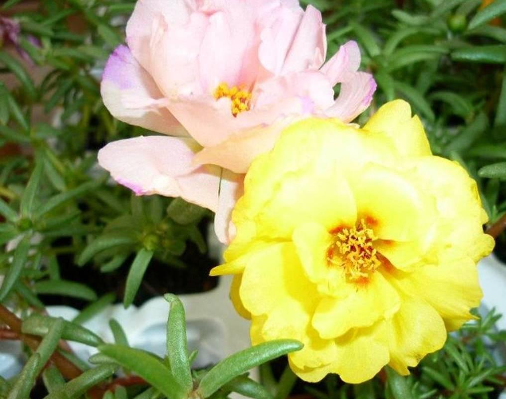 Fotos de flores para jardim externo com sol