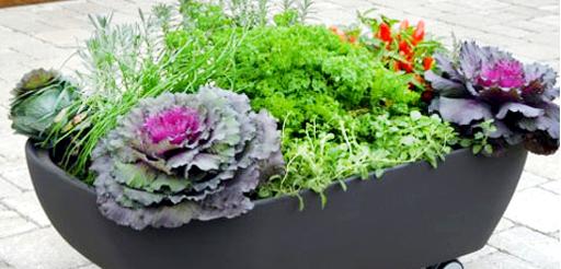 flores jardim de sol : flores jardim de sol:Flores para Jardim externo com sol