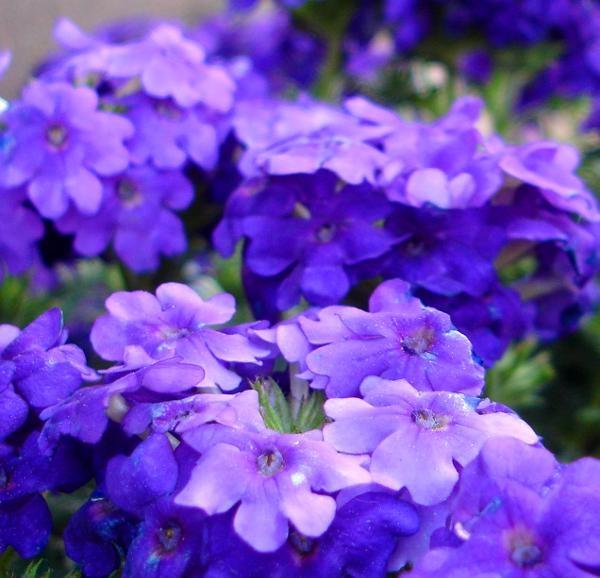 flores jardim de sol:Flores para Jardim externo com sol