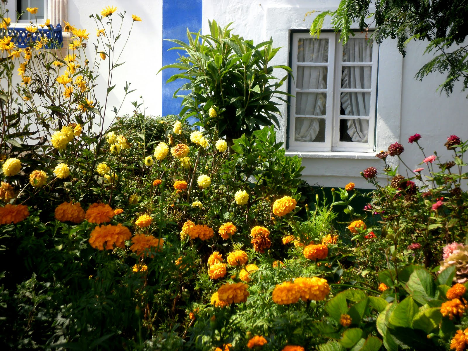 plantas jardim de sol : plantas jardim de sol:Flores para Jardim externo com sol