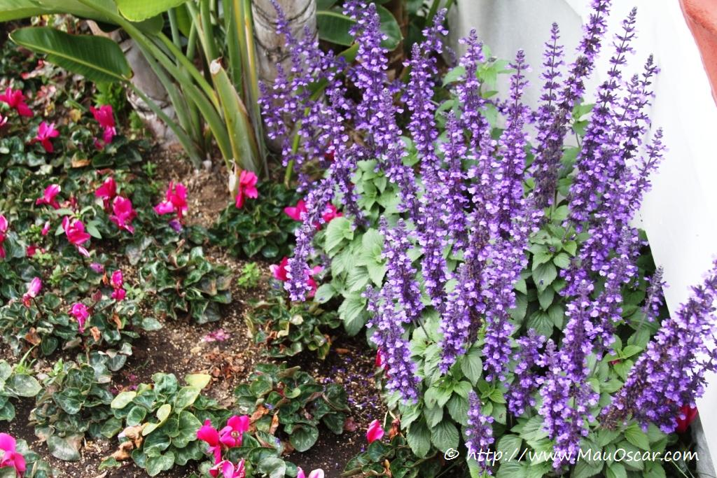 plantas para jardim muito sol:flores-para-jardim-de-externo07.jpg