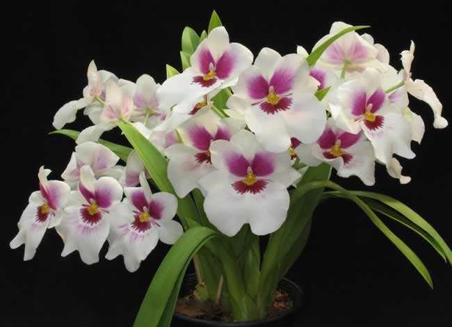 flores jardim externo:Flores para Jardim externo com sol