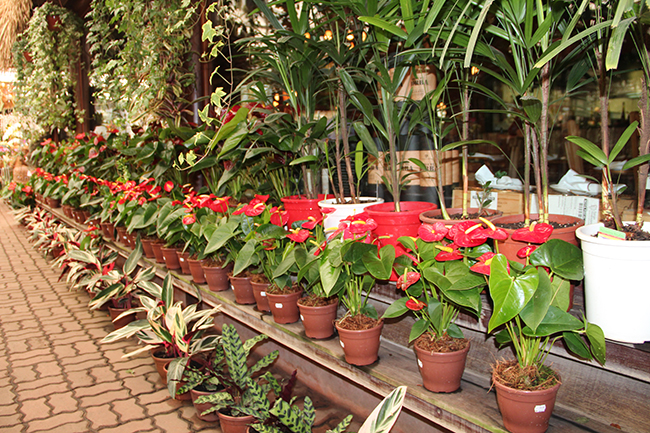 Flores para jardim externo com sol decorando casas for Vallas jardin ikea