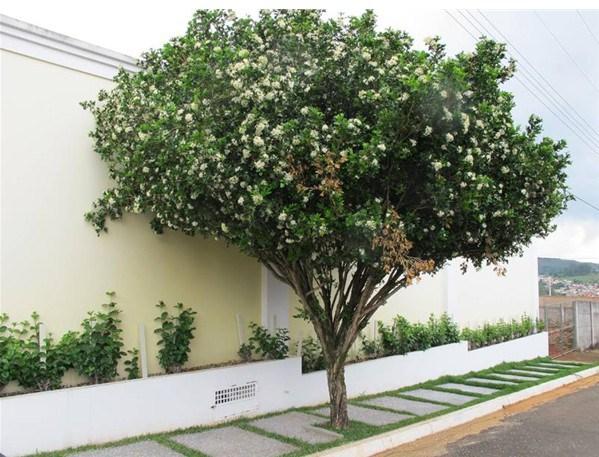 mini jardim quanto custa : mini jardim quanto custa:Quanto custa uma árvore para sombra de crescimento rápido?
