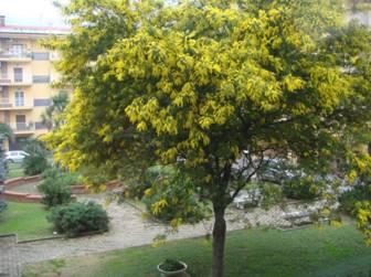 Rvores para sombra de crescimento r pido decorando casas for Arboles que dan sombra para jardin