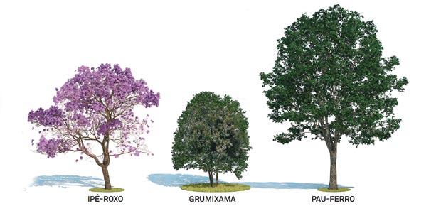 Fotos de árvores para calçada de pequeno porte  Decorando Casas