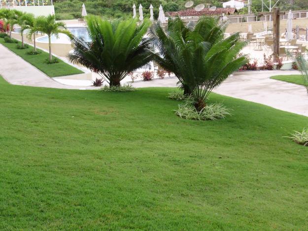 Fotos de coqueiros para jardins grandes e pequenos decorando casas for Grand jardin en friche