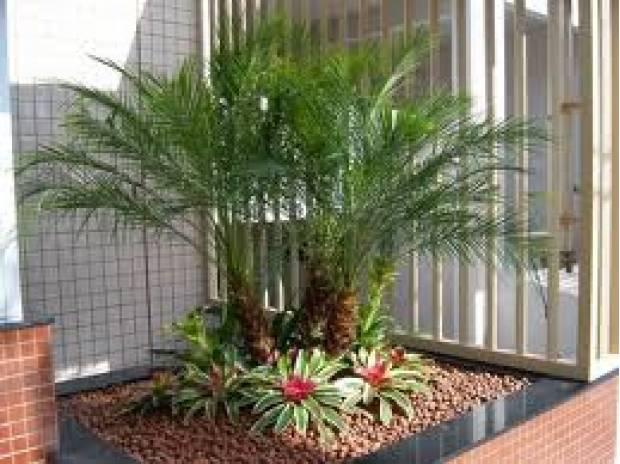 fotos de jardim grande:Fotos de coqueiros para jardins grandes e pequenos