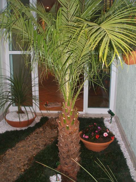 imagens jardins grandes:Fotos de coqueiros para jardins grandes e pequenos