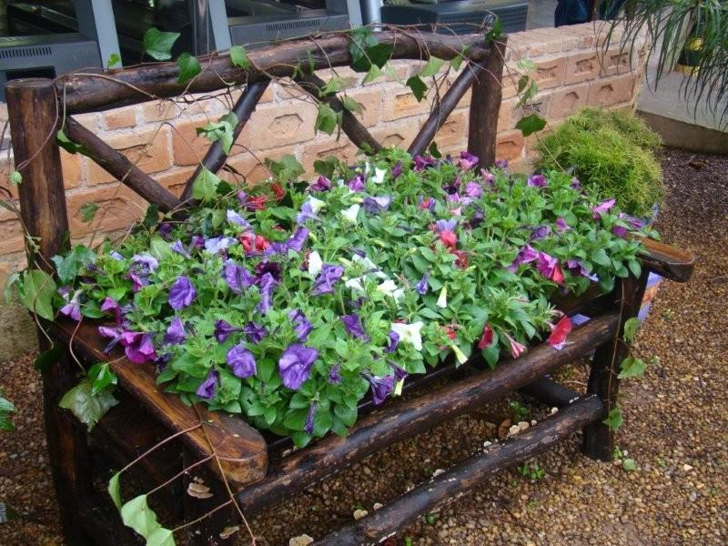 plantas de jardins tipos : plantas de jardins tipos:Flores Para Jardim
