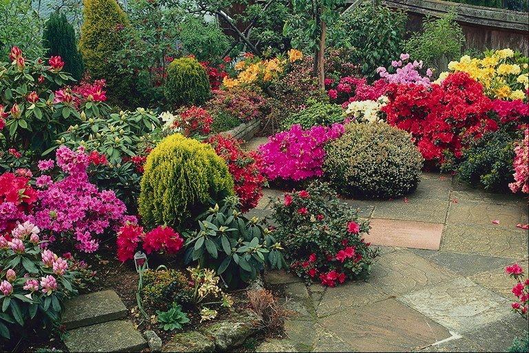 plantas jardim externo:Plantas Ornamentais