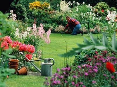 Tipos de plantas para jardim externo decorando casas for Gerbera in de tuin