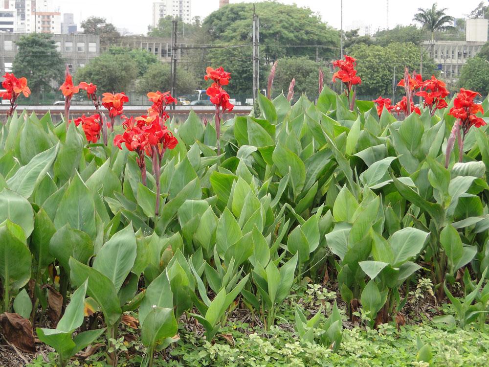 fotos de jardim externo:Tipos de plantas para jardim externo