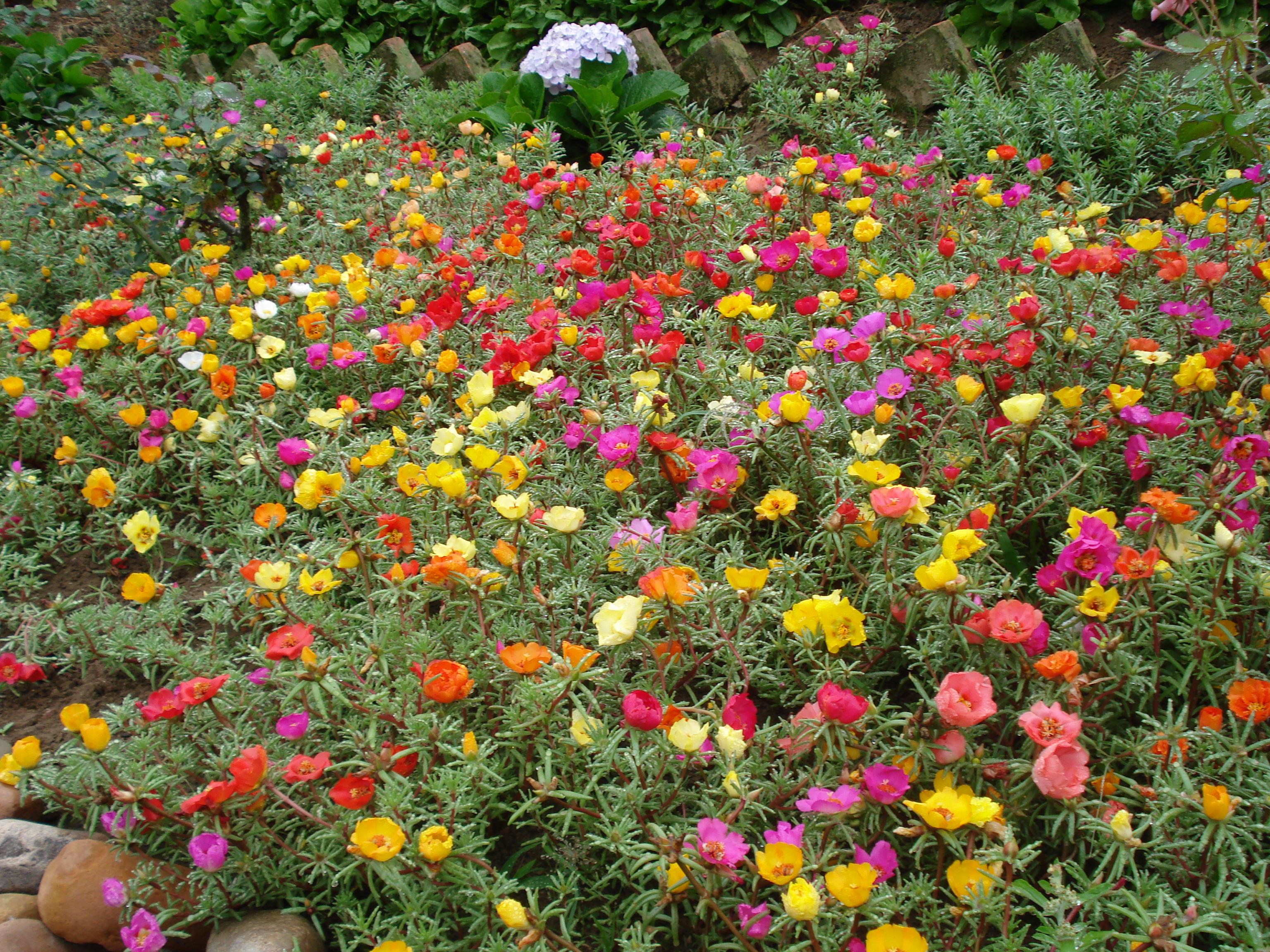 Tipos de plantas para jardim externo  Decorando Casas