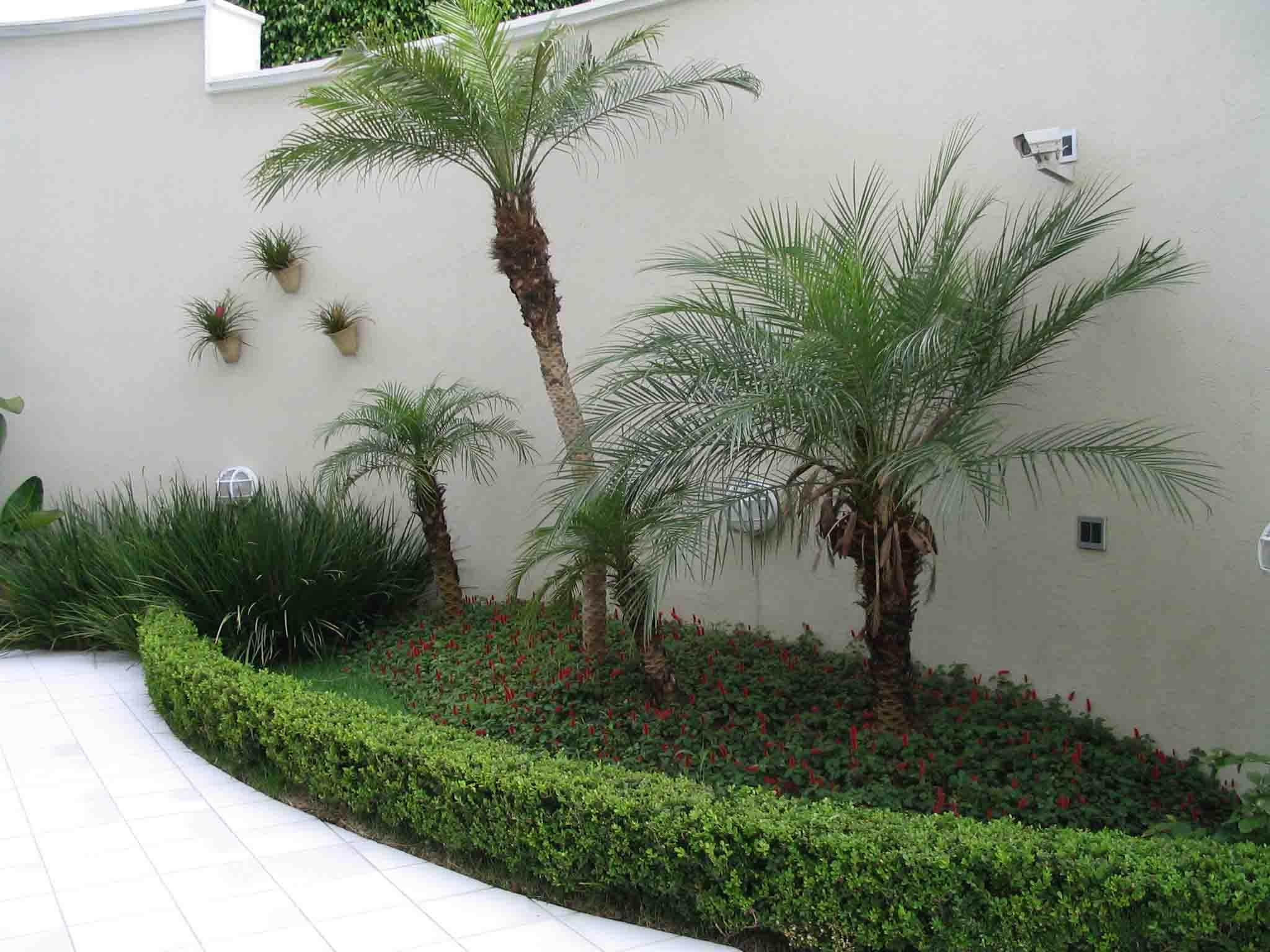 Plantas Ornamentais para Jardim Fotos e Externo  Jardim Decorado