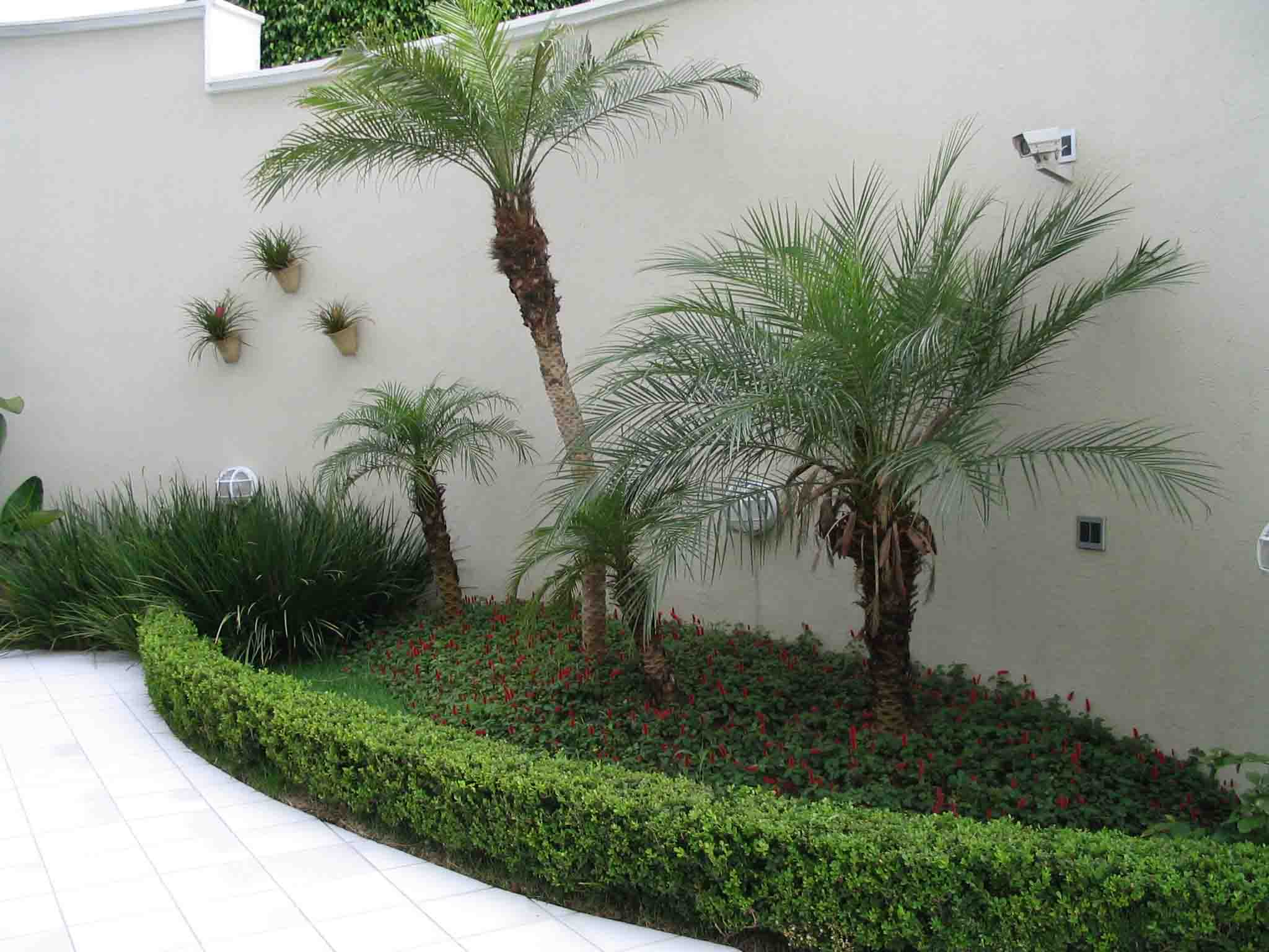 Tipos de plantas para jardim externo decorando casas for Ver jardines decorados