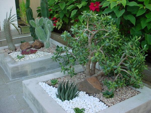 Como fazer um belo jardim para casa gastando pouco?Ter um belo jardim