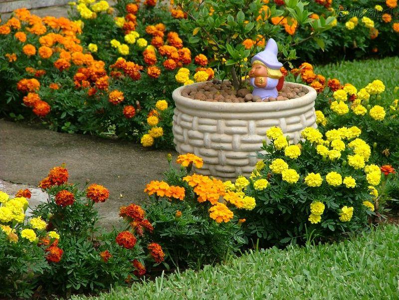 um jardim mais bem decorado que o outro sem contar a beleza que um