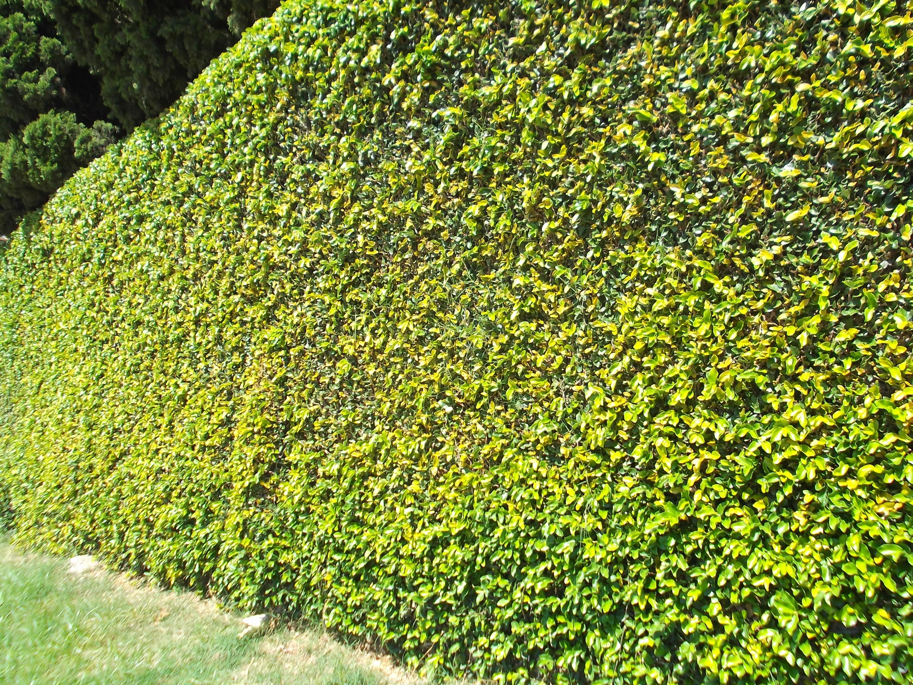 Image gallery trepadeira - Tipos de muros ...