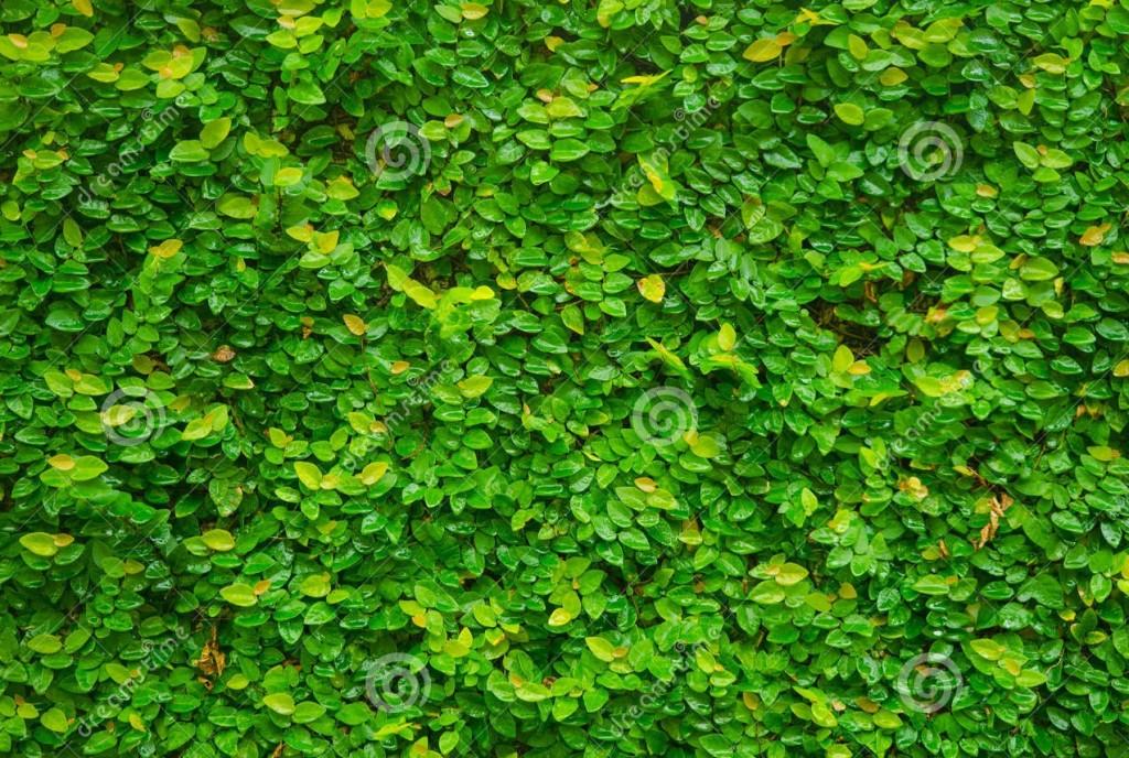 plantas-trepadeiras-para-parede-muro
