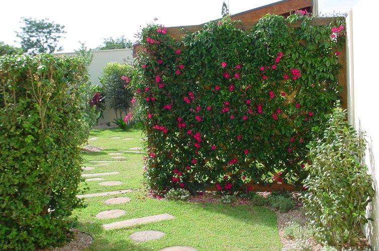 Plantas Trepadeiras De Parede E Muro Decorando Casas