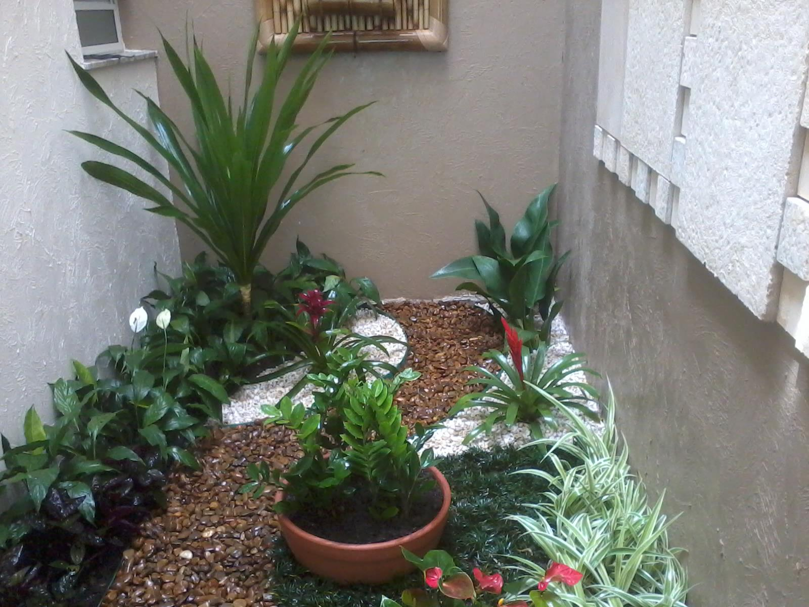 flores para jardim de inverno:Tipos de flores para jardim interno e de inverno