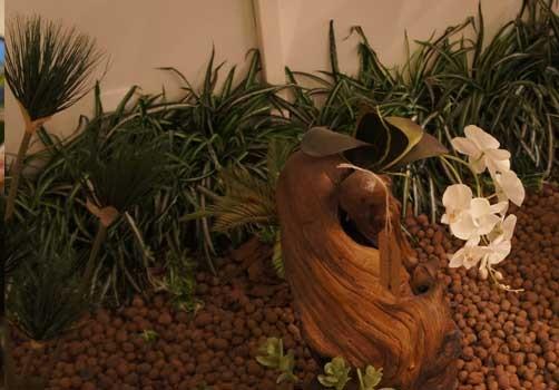 flores para jardim interno:Tipos de flores para jardim interno e de inverno