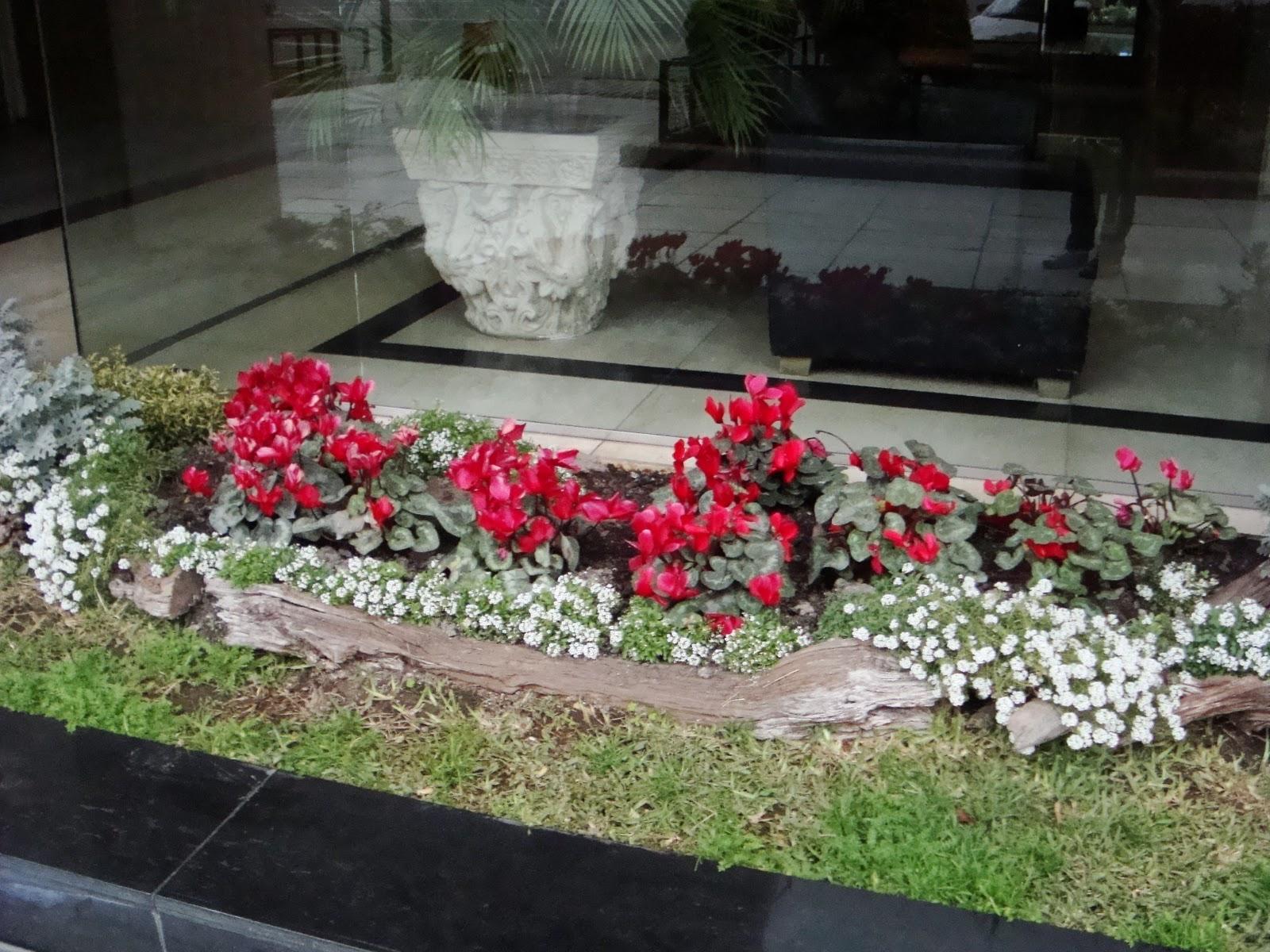 plantas jardim tipos:Tipos de flores para jardim interno e de inverno