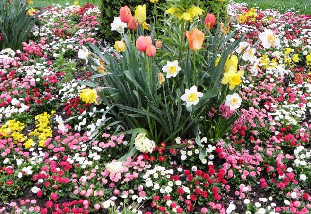 fotos jardins e flores : fotos jardins e flores:Nomes de flores para jardins e fotos