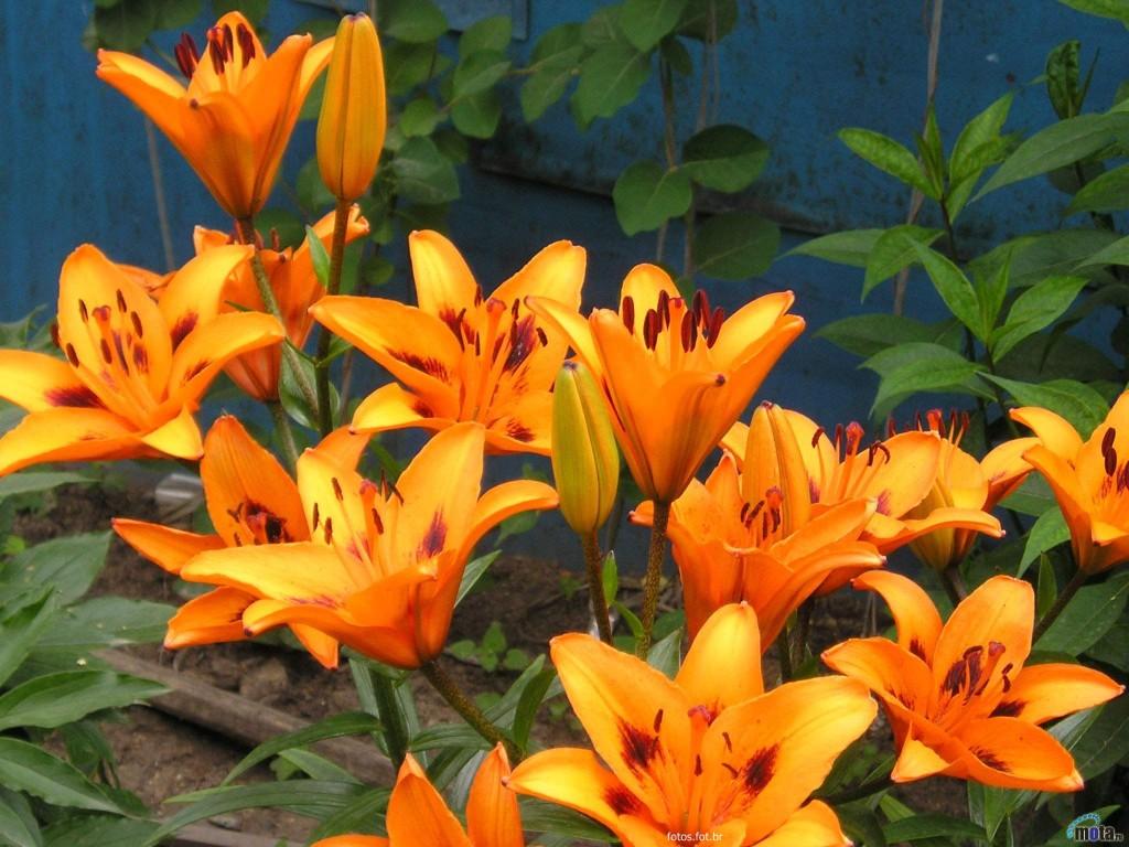 Nomes de flores para jardins e fotos decorando casas - Fotos de flores de jardin ...