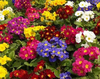 Nomes de flores para jardins e fotos Decorando Casas