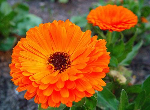 Nomes de flores para jardins e fotos decorando casas - Flores de verano ...