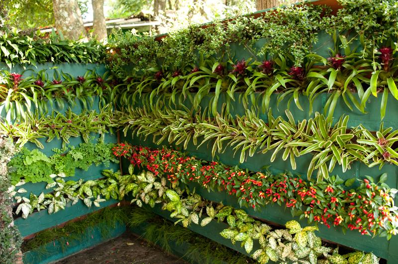 Como fazer um jardim vertical simples e barato?  Decorando Casas