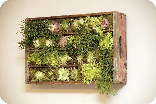 jardim vertical simples : jardim vertical simples:Crate Vertical Garden Wall