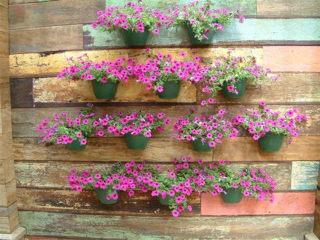 jardim vertical simples:Plantas Para Jardim Vertical
