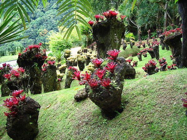 plantas jardim pequeno:Red Ginger