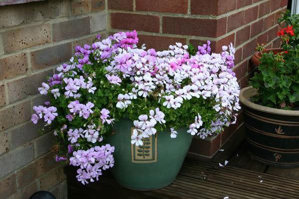 flores-jardim-simples-pequeno