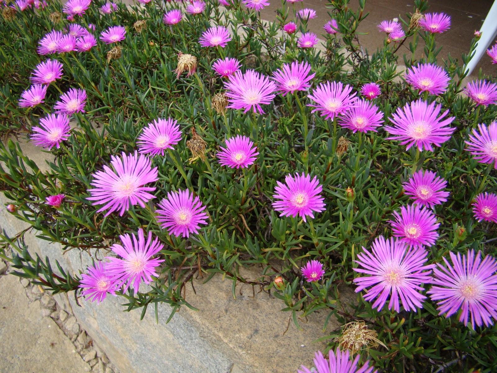 Flores para jardim simples e pequeno Decorando Casas