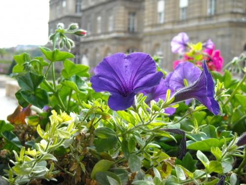 fotos jardim simples:flores jardim flores jardim pequeno flores jardim simples