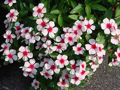 flores e jardins fotos:Flores para jardim simples e pequeno