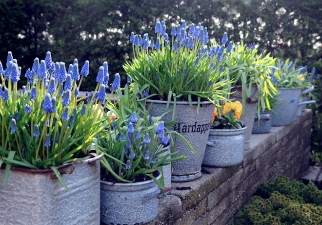 plantas jardim pequeno:Flores Para Jardim Pequeno 2 Pictures to pin on Pinterest