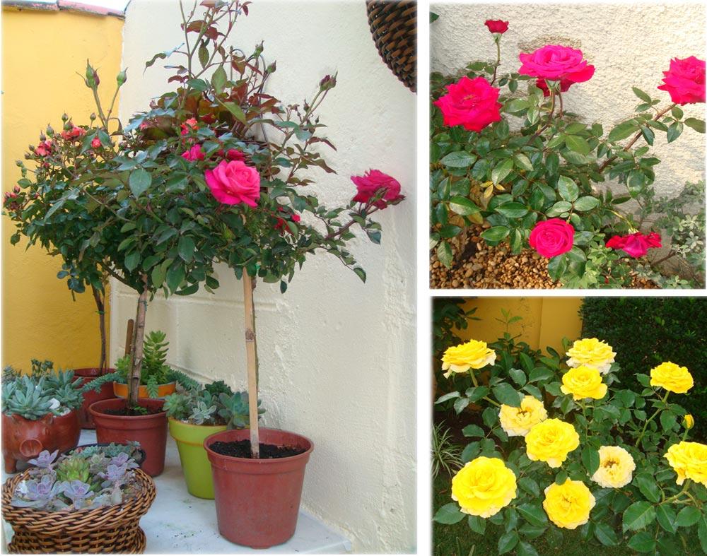 plantas para jardim muito sol:fotos de flores para jardim simples e pequeno