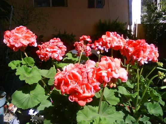plantas jardim pequeno:Flores para jardim simples e pequeno