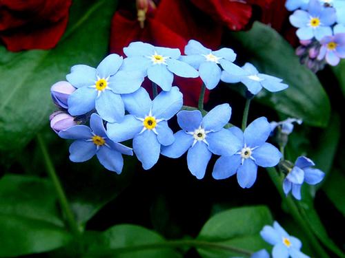 flores jardim perenes