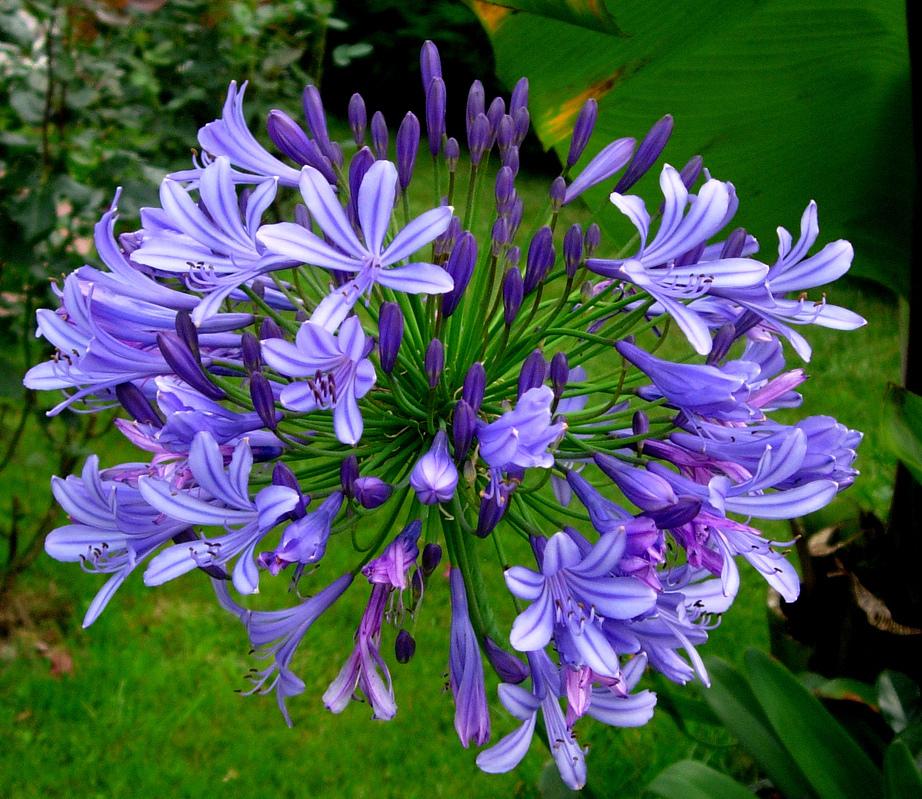 plantas jardim externo : plantas jardim externo:Flores perenes para jardim externo