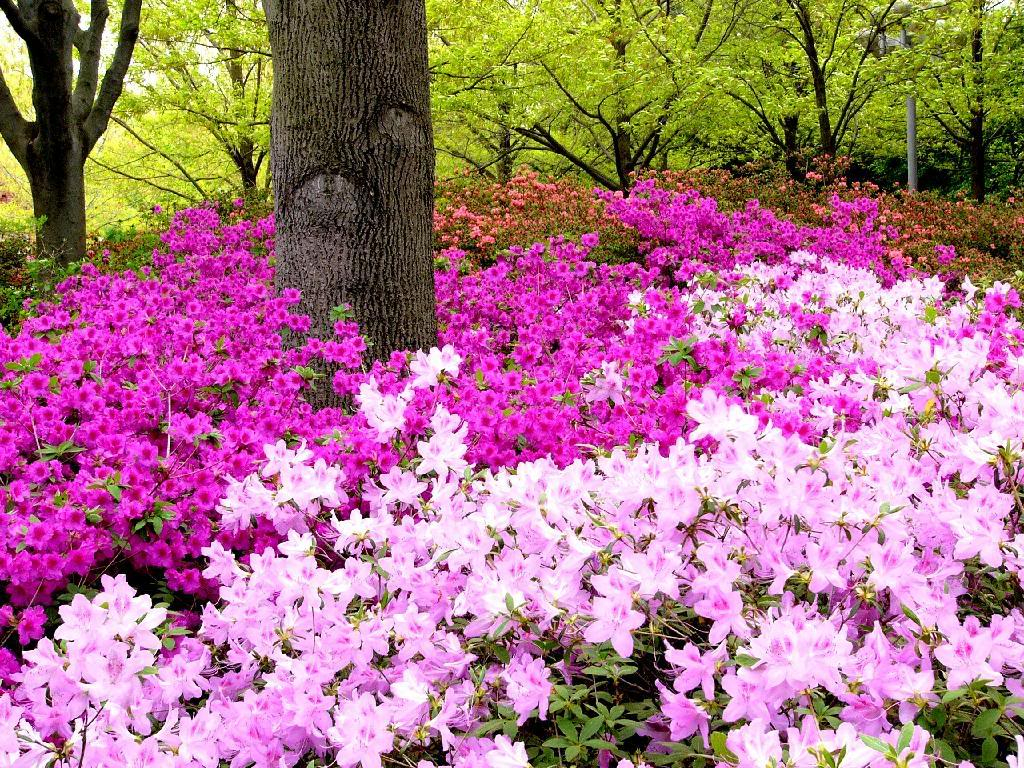 flores para jardim sol plenoFlores perenes para jardim externo