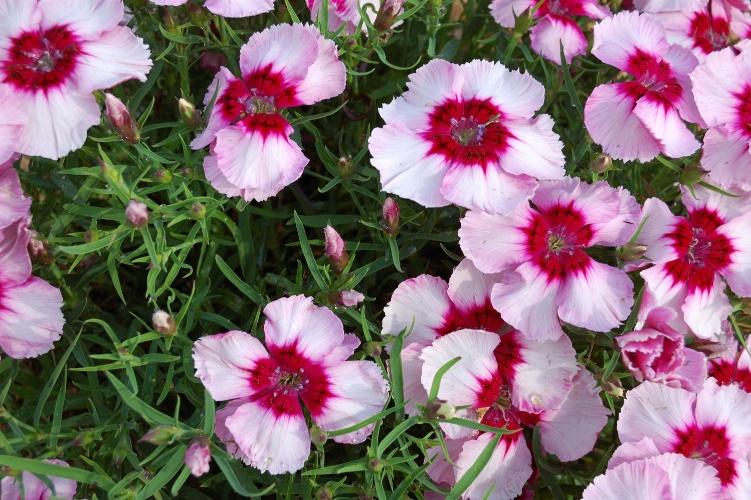 plantas para jardim muito sol:Flores perenes para jardim externo